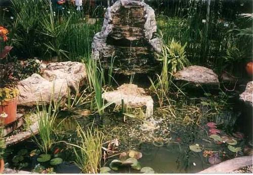 Pond Essentials