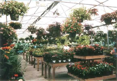 Beautiful Bedding Plants