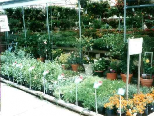 Beautiful, Healthy Plants
