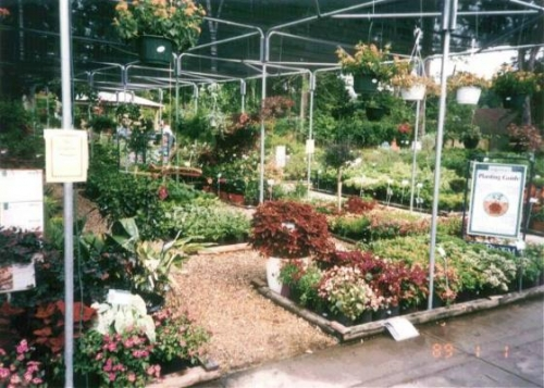 Lots of Bedding Plants to Choose From!