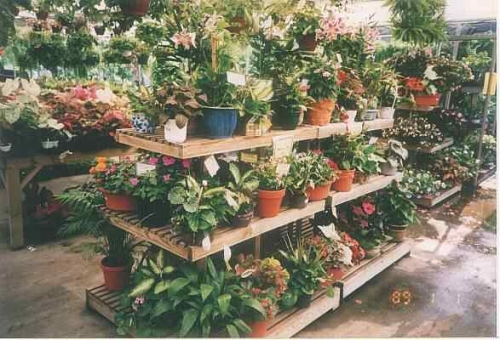 Potted Plant Selection