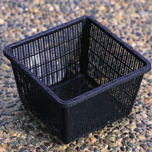 Beckett Corp Square plant basket for aquatic plants