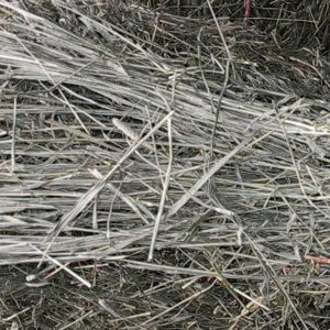 Grass Bales