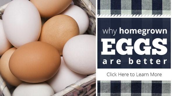 Homegrown Eggs