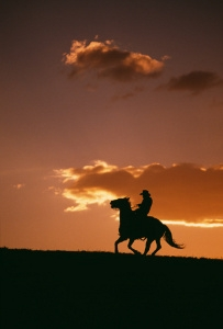 Equine Hoof Health & Maintenance