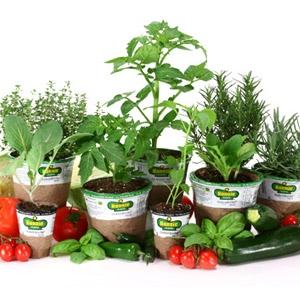 Bonnie Plants®
