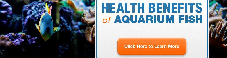 Aquarium slider