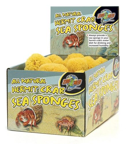 Zoo Bulk Sponges 36Pc Cntr Disp