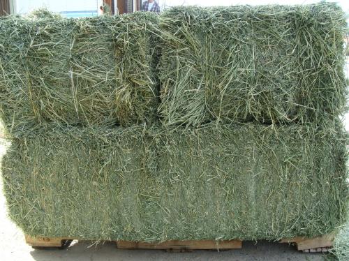 TG Till Alfalfa Hay