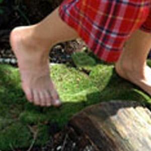 Moss Acres® Live Moss Plants