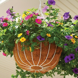 Combination Annual Hanging Basket