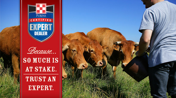 Certified Expert Dealer Cattle Slider