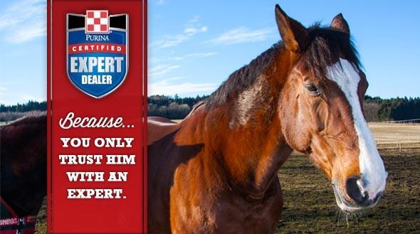 Equine CED ad