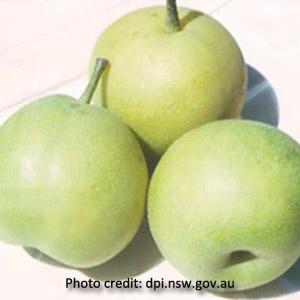 Asian Pear '20th Century'