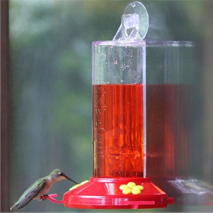 Perky-Pet® Window Mount Plastic Hummingbird Feeder