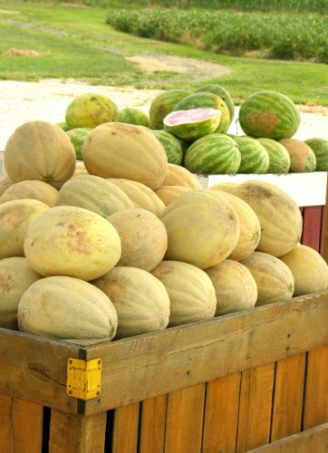 Locally Grown Cantaloupe