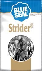 Strider Horse Feed