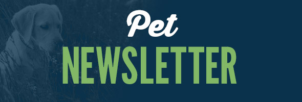Pet Newsletter