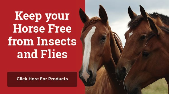 Horse - Free from Insects and Flies
