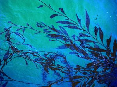 kelzyme 100 organic fossilized sea kelp 88oz