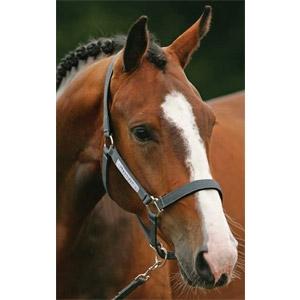 15% off Horse Reins