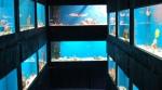 Saltwater Tanks