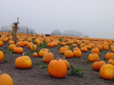 Buy one Pumpkin, Get one Free