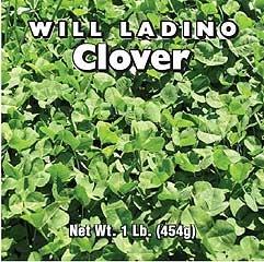 Ladino Clover 1 Lb