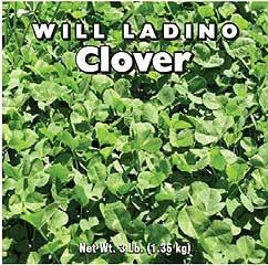 Clover Ladino 3 Lb
