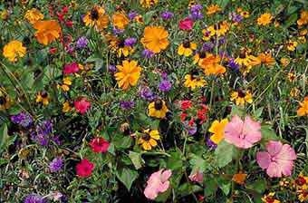 Wildflower North America Mix  4oz