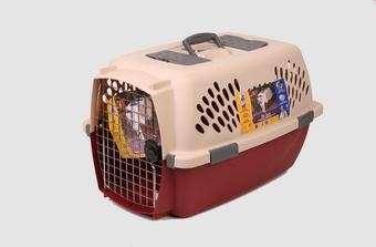 Pet Taxi Sand/maroon Intermediate