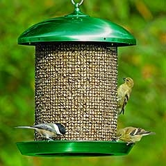 Stokes Select Sunflower Seed Screen Feeder Bronze