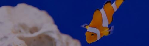 Aquarium & Aquatics