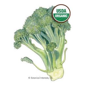 Organic Broccoli Di Cicco Seeds
