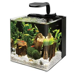 Evolve Aquarium