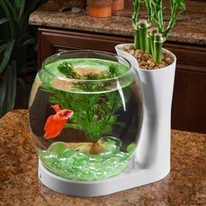 elive™ Betta Bowl Planter