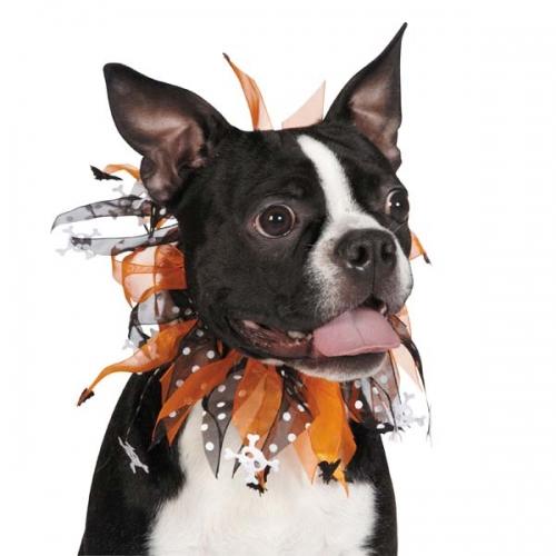Aria Halloween Scrunchy Pet Collar