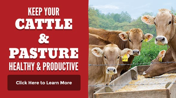 Happy and Healthy Cattle Pasture