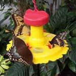 Songbird Essentials® Butterfly Feeder