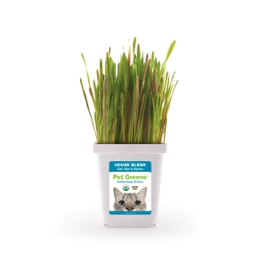 Pet Greens® Live Pet Grass, House Blend with Oat, Rye and Barley