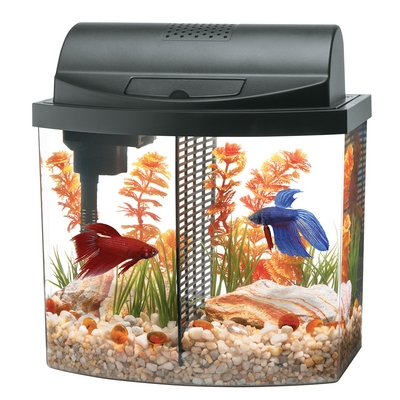 Betta Bow 2.5 Mini Bow™ Desktop Aquarium Kit