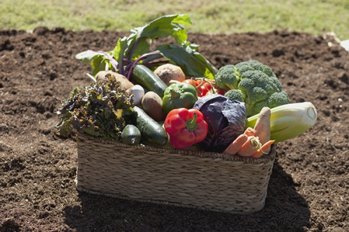 'Keeping Your Garden in Shape' Classes at 11-Noon & 1-2pm