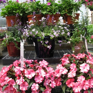 All Annuals 50% OFF