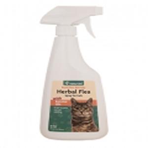 spraying male cat