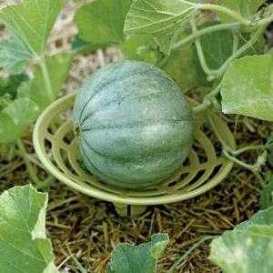 Gardener's Supply Melon & Squash Cradles