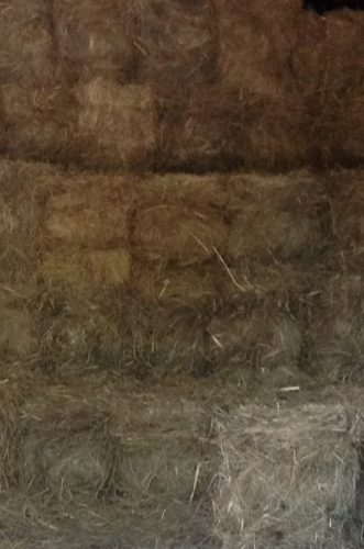 Salt Hay