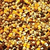 Moyer's Purgrain Breeders Conditioner 16% SYC Pigeon Feed