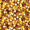 Moyer's Purgrain Daily 14% SYC Pigeon Feed