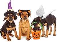 FREE Pet Costume Photos & Contest