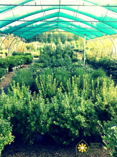 Select Nursery Stock - 25% OFF!